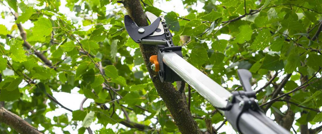 Our Tree Company Will Go Out on a Limb for You