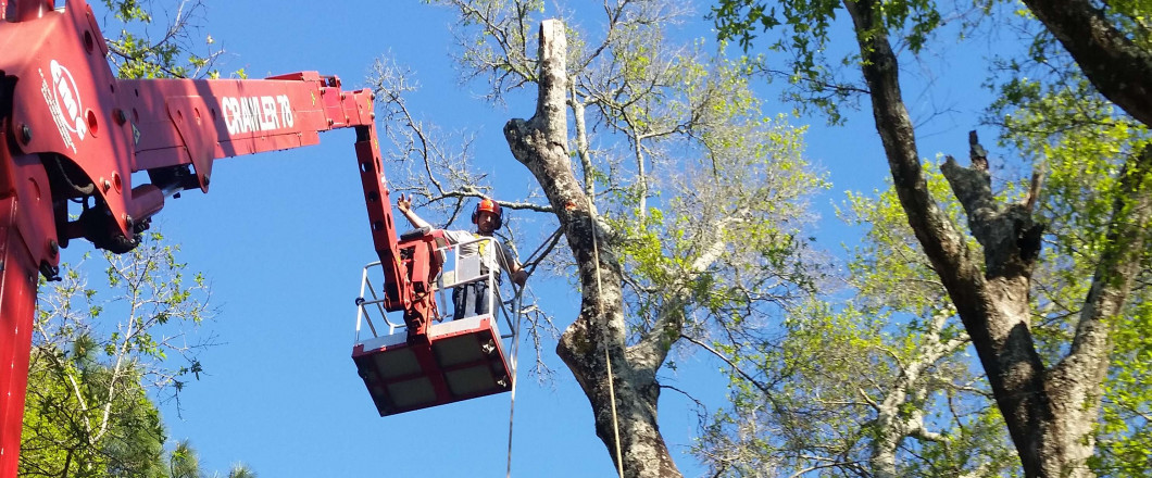 tree services Pensacola, FL